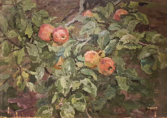 Васин Владимир Алексеевич. Ветка яблони