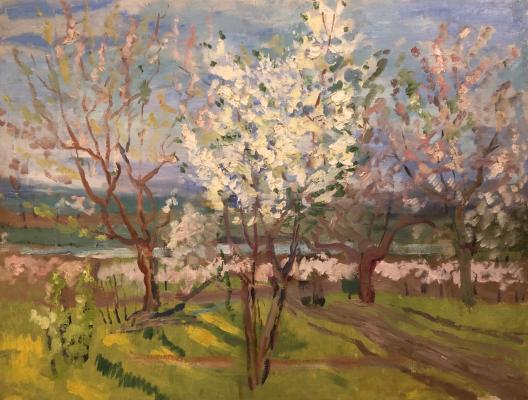 Зернова Екатерина Сергеевна. Цветущие яблони