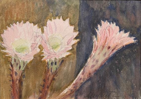 Костенко Константин Евтихиевич. Цветы кактуса