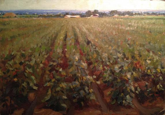 "Seredin I. I. ""Cotton fields."""