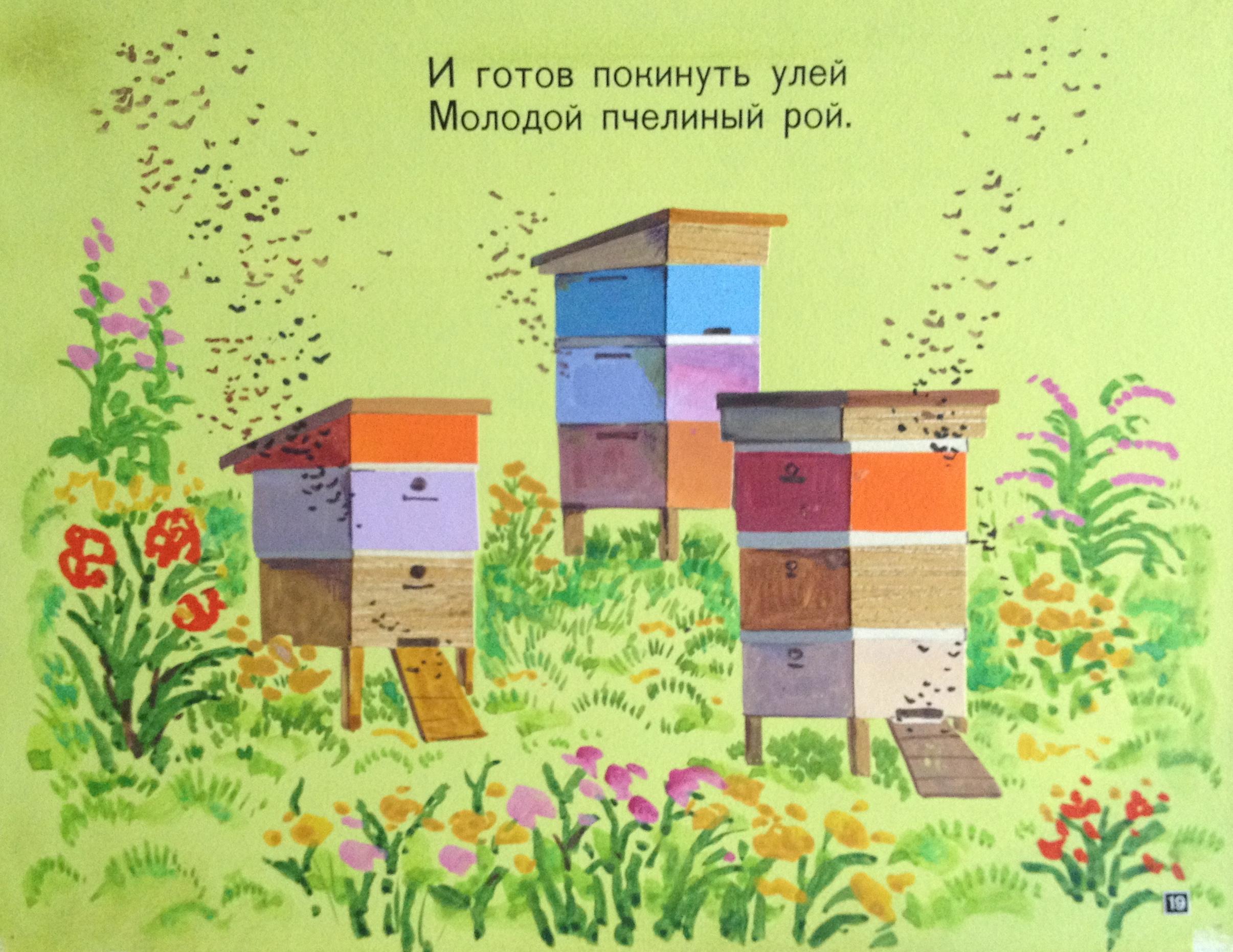 Зеброва Тамара Александровна. И готов покинуть улей молодой пчелиный рой.